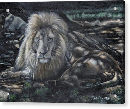 Lion In The Shade Acrylic Print