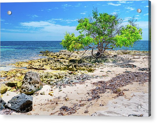 Lone Shore Tree Acrylic Print