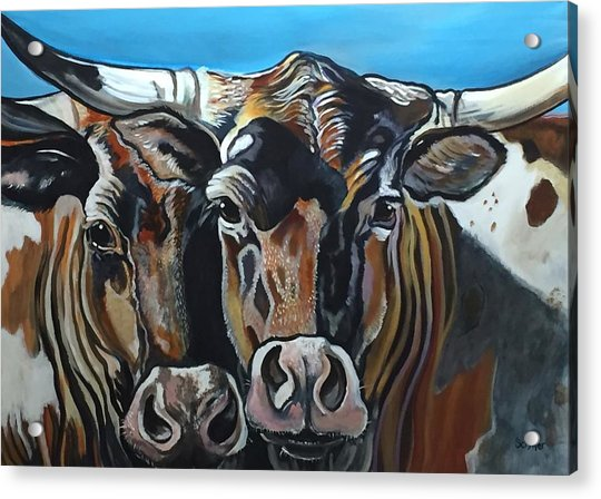Longhorns, Interrupted Acrylic Print