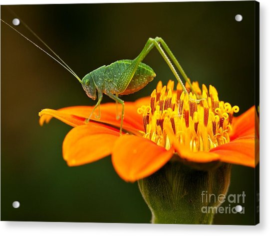Macro Photos From Insects, Nature And Acrylic Print by Dudu Linhares