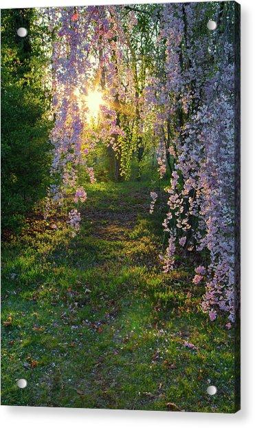 Magnolia Tree Sunset Acrylic Print