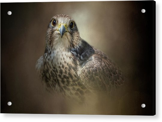 Majestic Hunter Acrylic Print