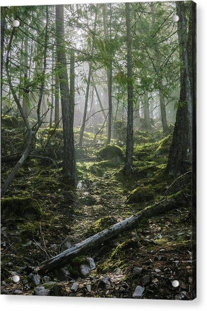 Misty Forest Morning Acrylic Print