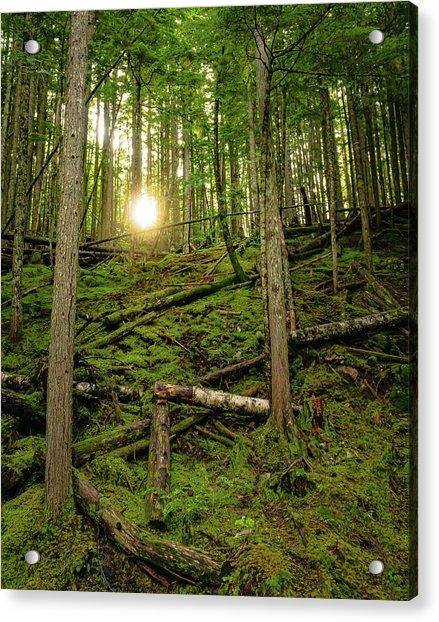 Monashee Forest Portrait Acrylic Print