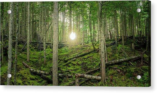 Monashee Forest Sunset Acrylic Print