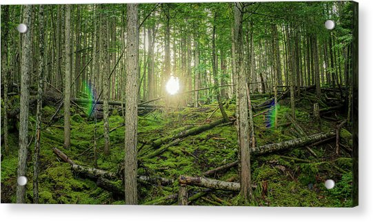 Monashee Forest Sunset With Flare Acrylic Print