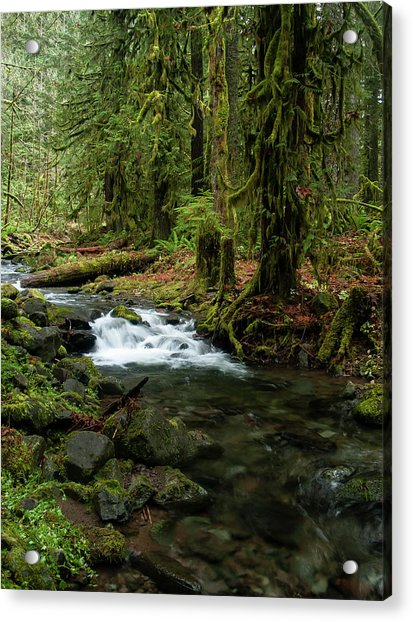 Mossy Cascade Acrylic Print