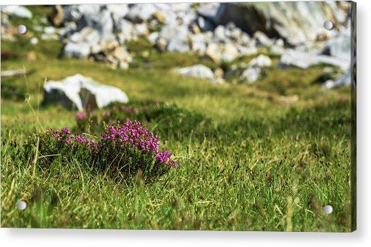 Mountain Heather Acrylic Print