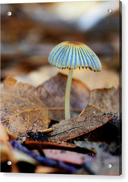 Mushroom Under The Oak Tree Acrylic Print