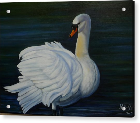 Mute Swan Acrylic Print by Janet Silkoff