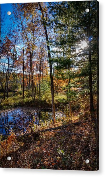 October Late Afternoon Acrylic Print