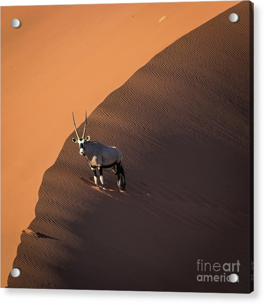 Oryx On The Edge, Namibia Acrylic Print