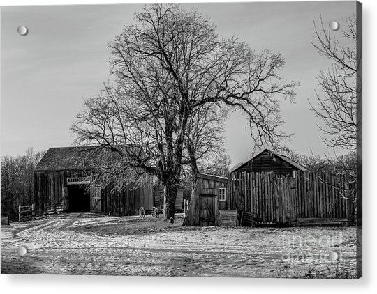 Out In The Barn Yard Acrylic Print