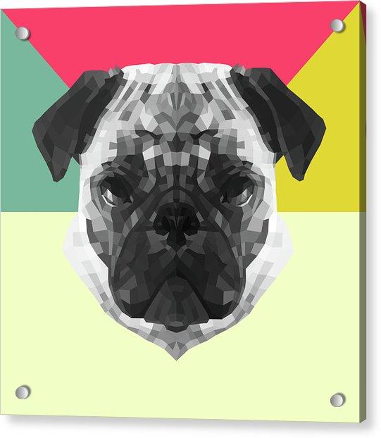 Party Pug Acrylic Print