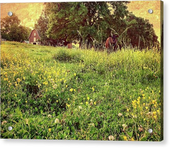 Peaceful Pastoral Perspective Acrylic Print