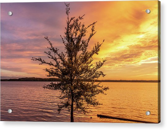 Percy Priest Lake Sunset Young Tree Acrylic Print