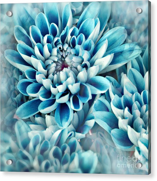Photo Illustration Of Abstract Flower Acrylic Print by Annmarie Young