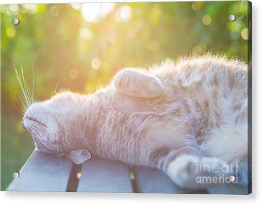 Playful Domestic Cat Lying On Wooden Acrylic Print