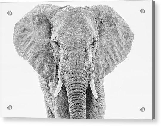Portrait Of An African Elephant Bull In Monochrome Acrylic Print