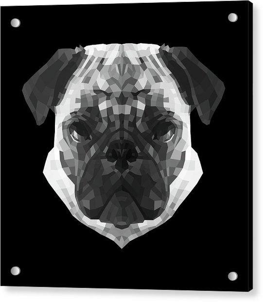 Pug's Face Acrylic Print