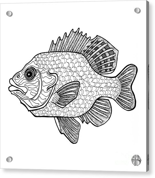 Pumpkinseed Fish Acrylic Print