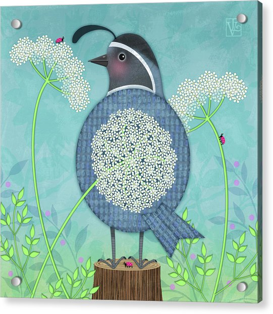 Q Is For Quail And Queen Anne's Lace Acrylic Print
