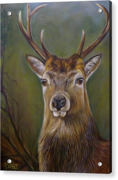 Red Deer Stag Acrylic Print by Janet Silkoff