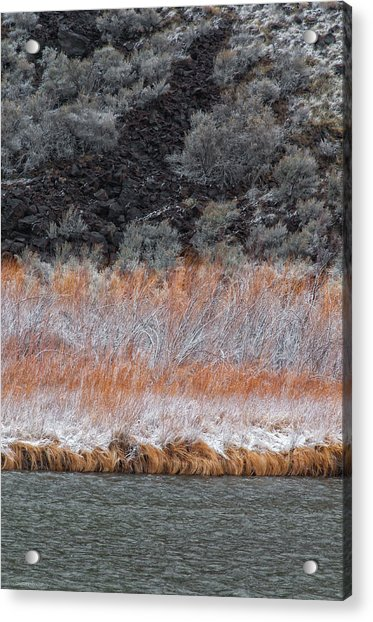 Red Willow Rio Acrylic Print