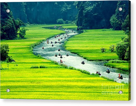 Rice Field And River, Ninhbinh, Vietnam Acrylic Print