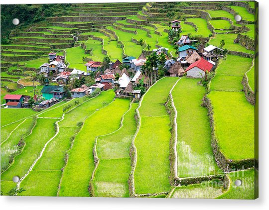 Rice Terraces In The Philippines. The Acrylic Print