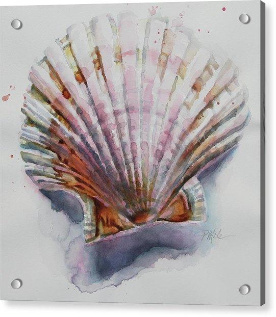 Scallop Seashell Acrylic Print
