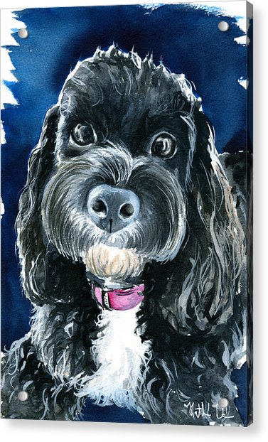 Scout - Cavoodle Dog Painting Acrylic Print