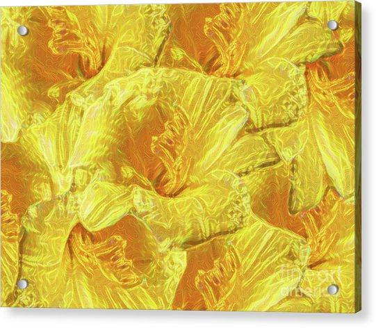 Selective Yellow Lilies Acrylic Print