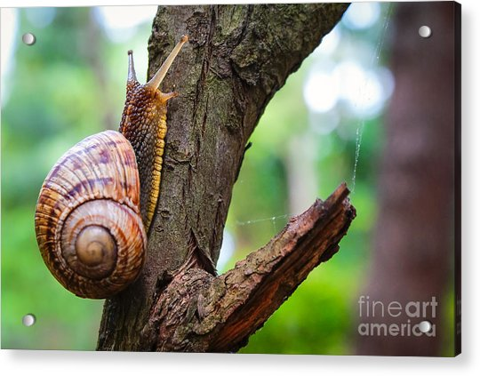 Snail On The Tree In The Garden. Snail Acrylic Print