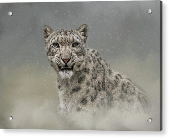 Snow Ghost Acrylic Print