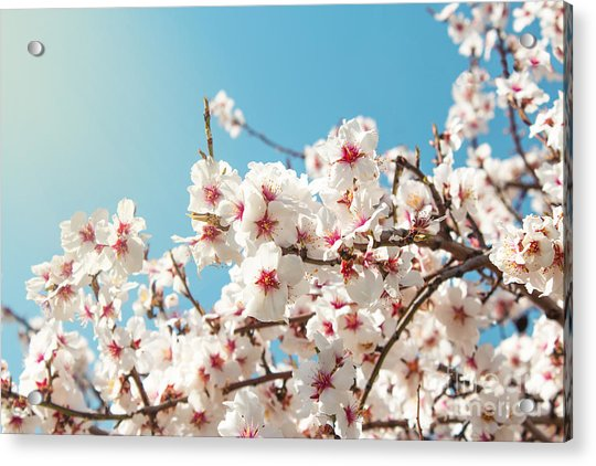 Spring Flowers. Spring Flowers Acrylic Print