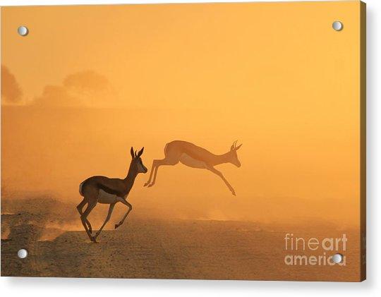 Springbok - African Wildlife Background Acrylic Print