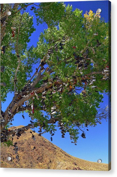 Acrylic Print featuring the photograph Strange Fruit by David Bailey