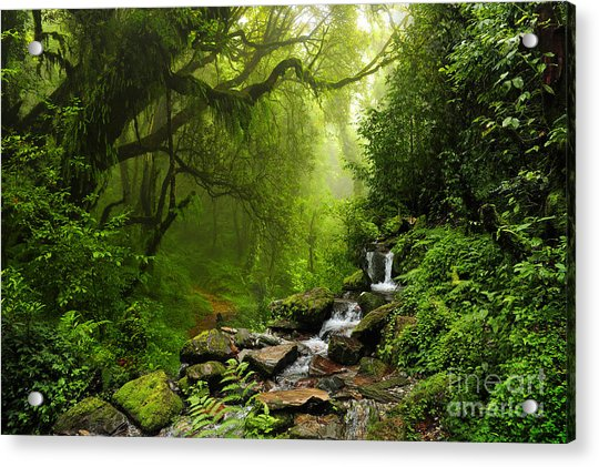 Subtropical Forest In Nepal Acrylic Print