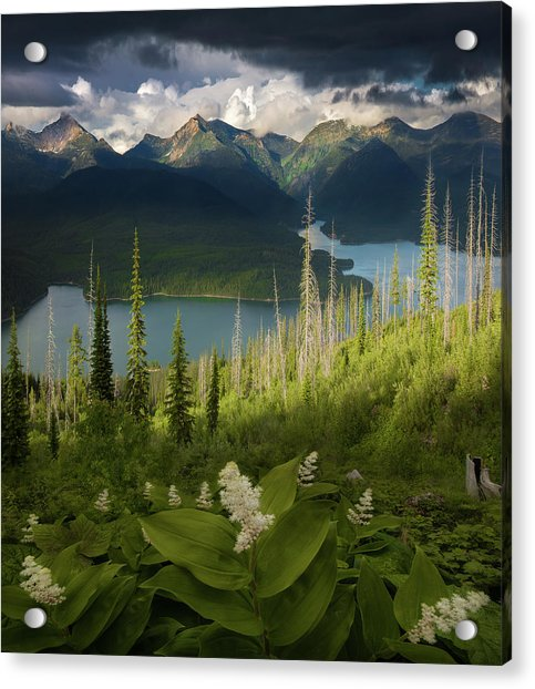 Summer Bloom / Hungry Horse Reservoir, Western Montana  Acrylic Print