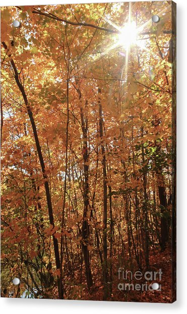 Sunburst Of Fall Acrylic Print