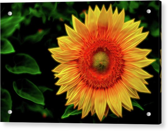 Acrylic Print featuring the digital art Sunflower by Kevin McClish