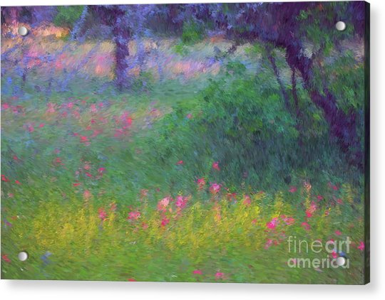 Sunset In Flower Meadow Acrylic Print