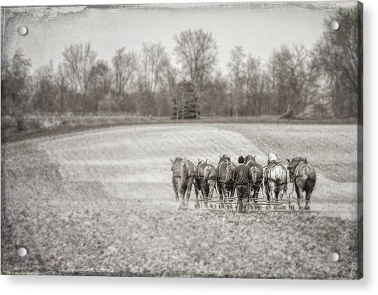 Team Of Six Horses Tilling The Fields Acrylic Print