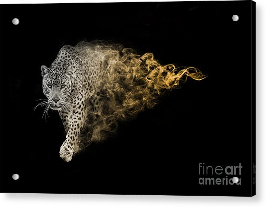 The African Leopard Is One Of The Big Acrylic Print