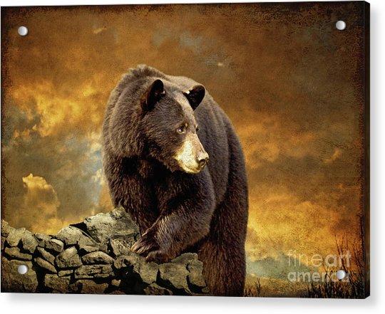 The Bear Went Over The Mountain Acrylic Print