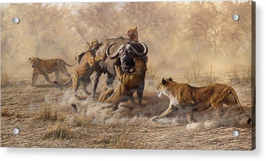 Acrylic Print featuring the painting The Take Down - Lions Attacking Cape Buffalo by Alan M Hunt