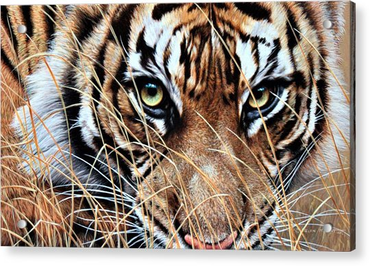 Acrylic Print featuring the painting Tiger Eyes By Alan M Hunt by Alan M Hunt