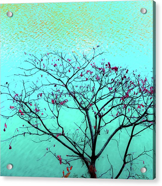 Tree And Water 1 Acrylic Print