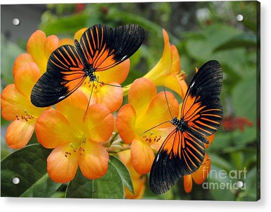 Tropical Rhododendron Simbu Sunset Acrylic Print